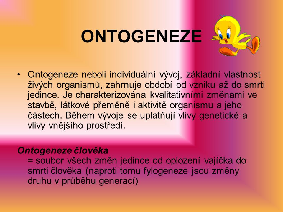 ONTOGENEZE Ontogeneze neboli individuální vývoj, základní vlastnost živých organismů, zahrnuje období od vzniku až do smrti jedince.