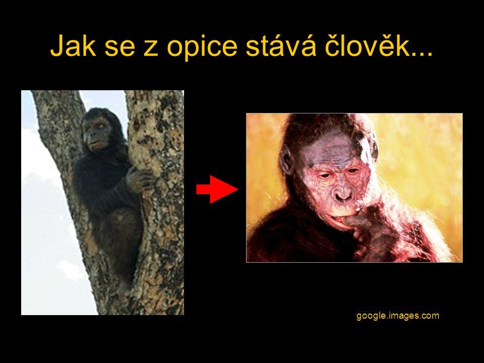 Jak se z opice stává člověk... google.images.com