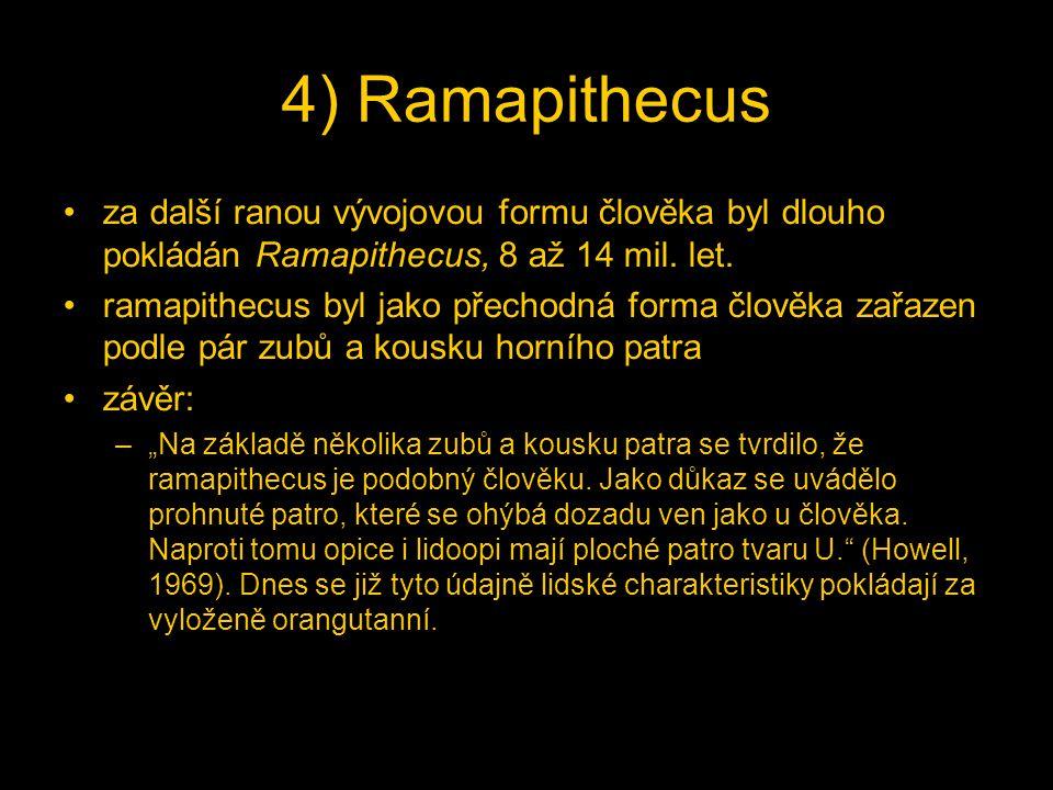 4) Ramapithecus za další ranou vývojovou formu člověka byl dlouho pokládán Ramapithecus, 8 až 14 mil. let. ramapithecus byl jako přechodná forma člově