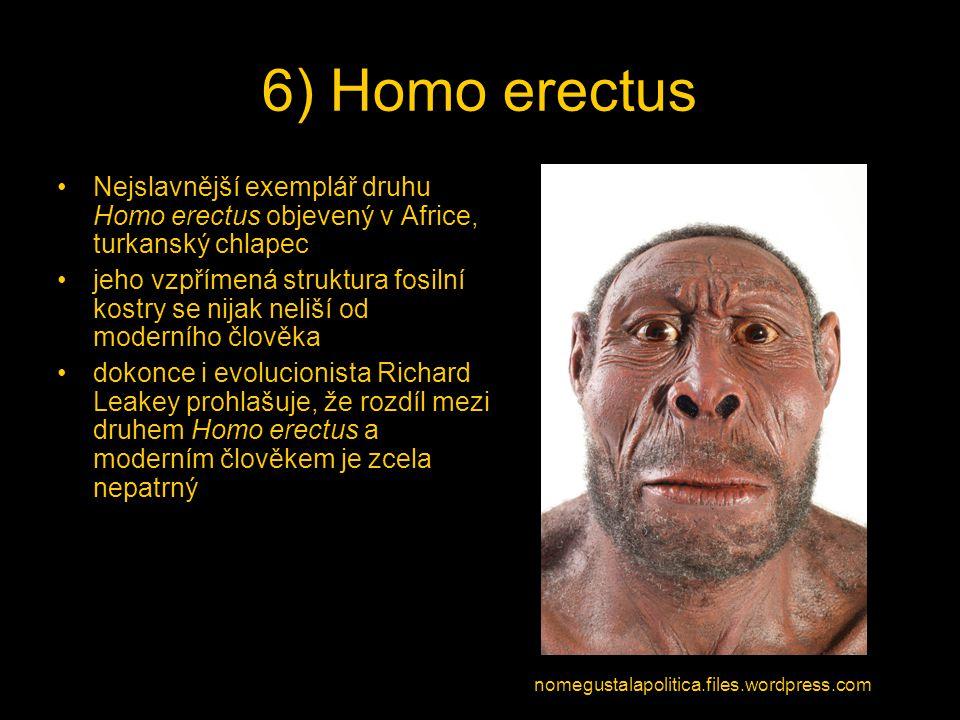 Nejslavnější exemplář druhu Homo erectus objevený v Africe, turkanský chlapec jeho vzpřímená struktura fosilní kostry se nijak neliší od moderního člo