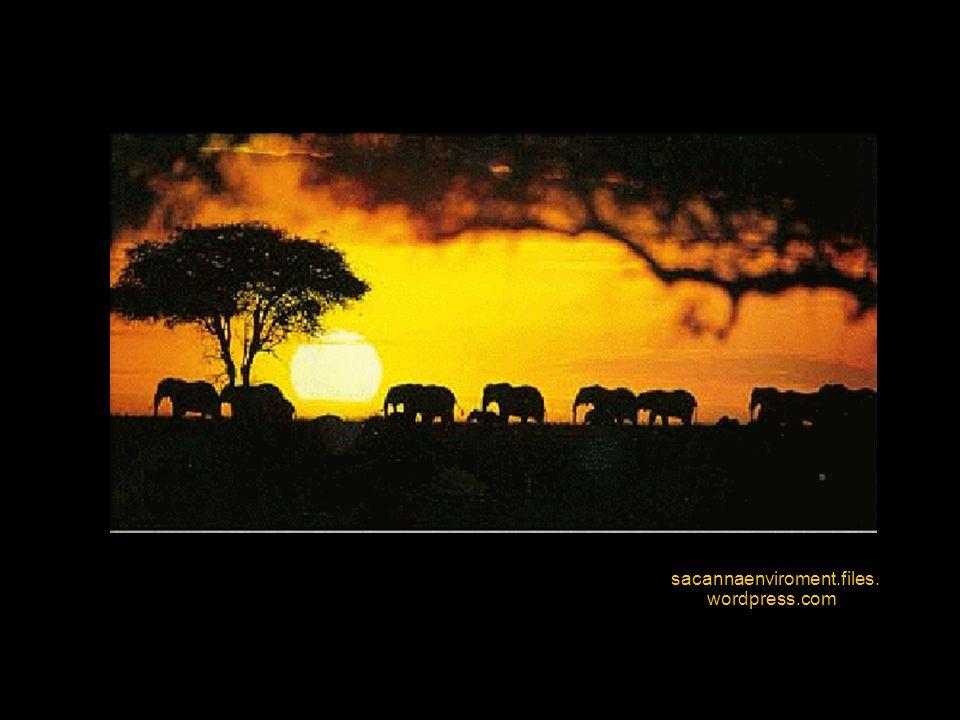 8) Starobylý moderní a dále: počátkem sedmdesátých let objevil Louis Leakey v takzvané vrstvě Bed II spolu s fosilie- mi druhů Australopithecus, Homo habilis a Homo erectus zbytky kamenné chýše, jejíž konstrukce se v některých částech Afriky používá dodnes.