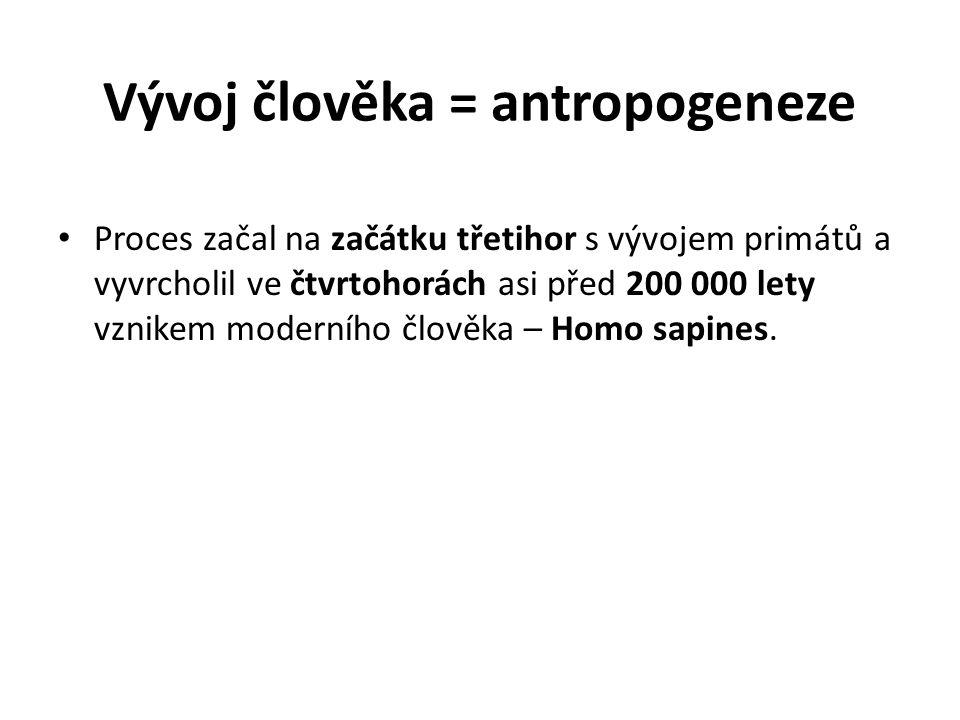 Hominizace = vývojové změny prokazatelné na kostře, které směřují k moderním formám druhu Homo sapiens.