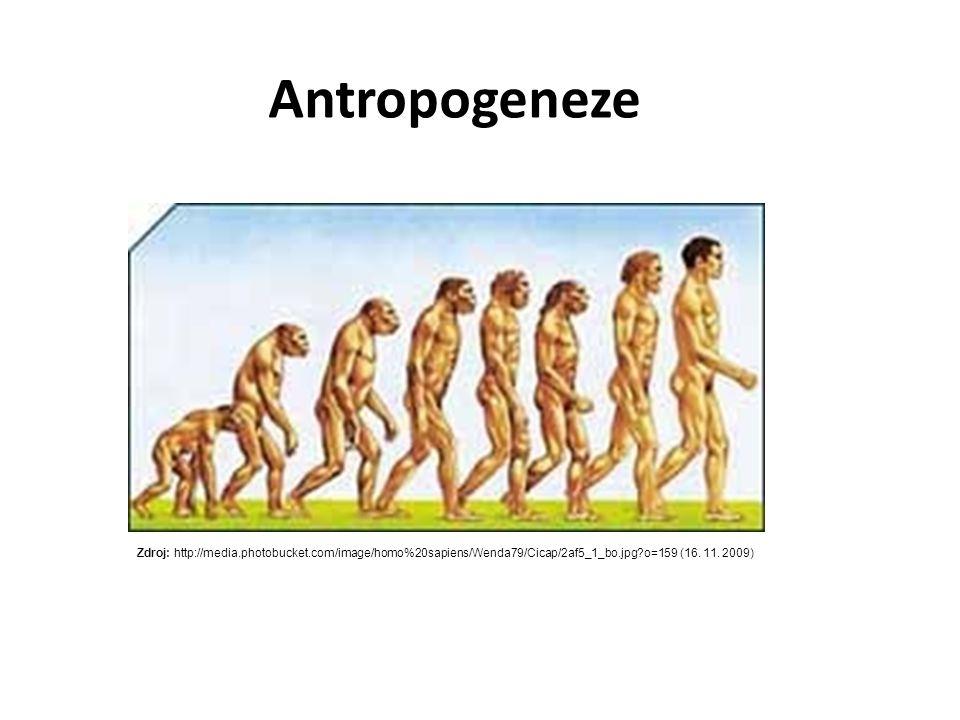 Australopithecus Homo habilis Homo erectus Homo sapiens Homo neanderthalensis Další druhy rodu Australopithecus Ramapithecus