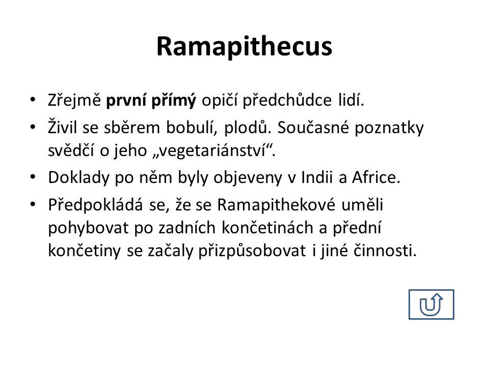 Australopithecus Zdroj: http://media.photobucket.com/image/australopithecus/megalithor/0490 560541240540570500490490570521.jpg?o=1 (16.
