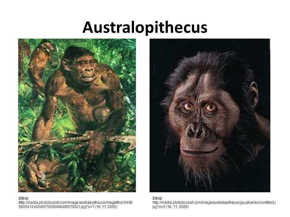 Lebka připomíná spíš lebku opice s objemem 500 cm 3.
