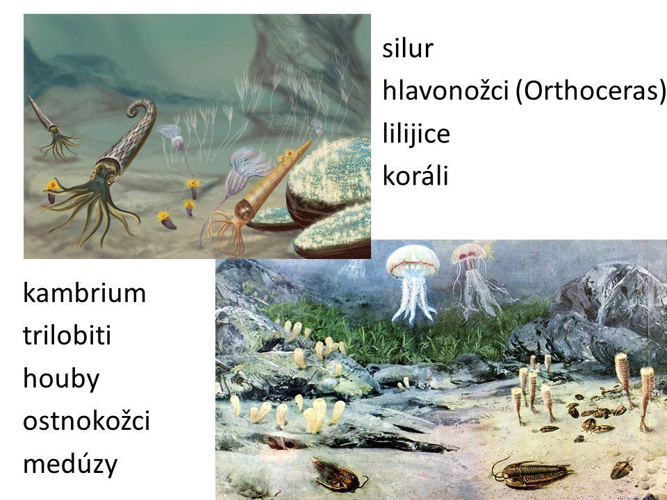 silur hlavonožci (Orthoceras) lilijice koráli kambrium trilobiti houby ostnokožci medúzy