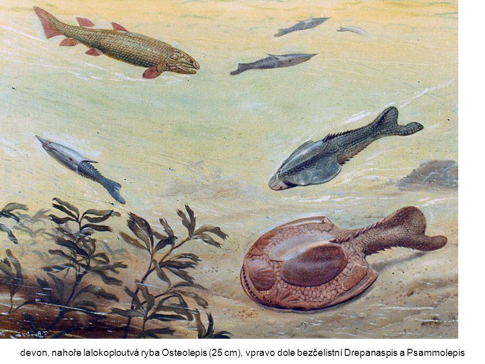 devon, nahoře lalokoploutvá ryba Osteolepis (25 cm), vpravo dole bezčelistní Drepanaspis a Psammolepis