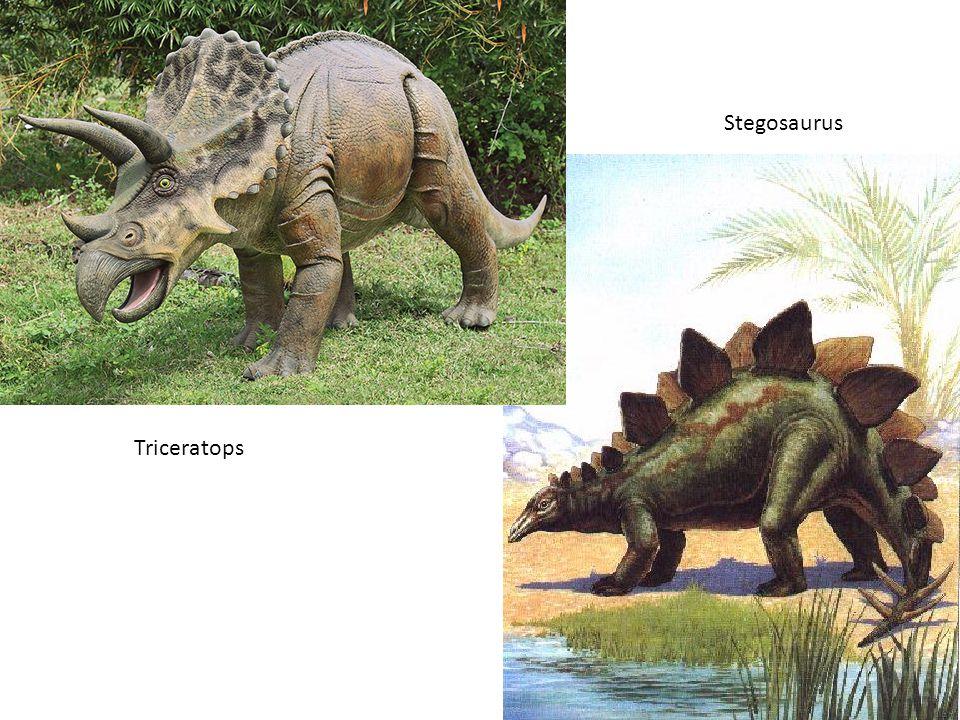 Triceratops Stegosaurus