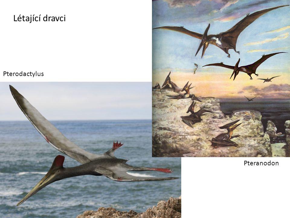 Pterodactylus Pteranodon Létající dravci