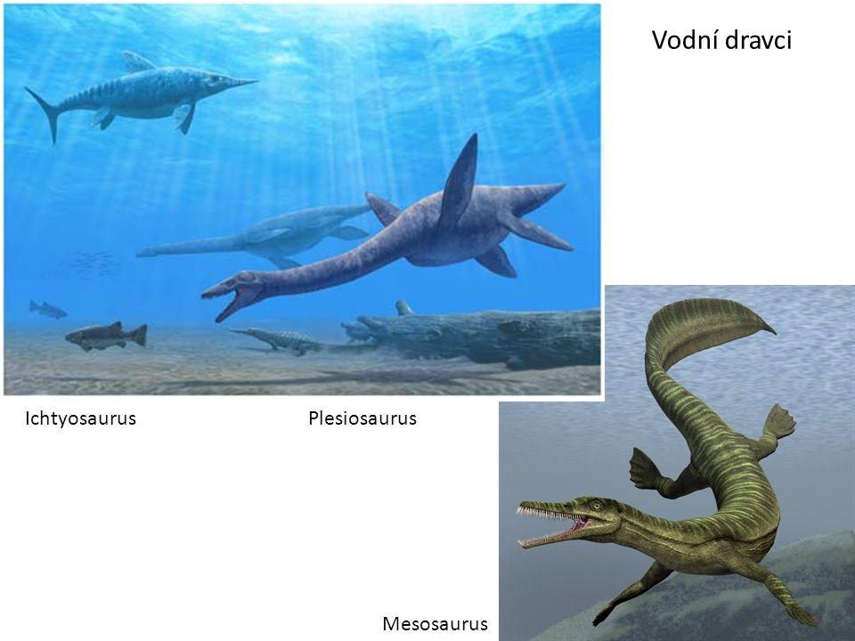 Vodní dravci Mesosaurus IchtyosaurusPlesiosaurus