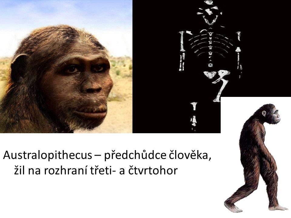 Australopithecus – předchůdce člověka, žil na rozhraní třeti- a čtvrtohor