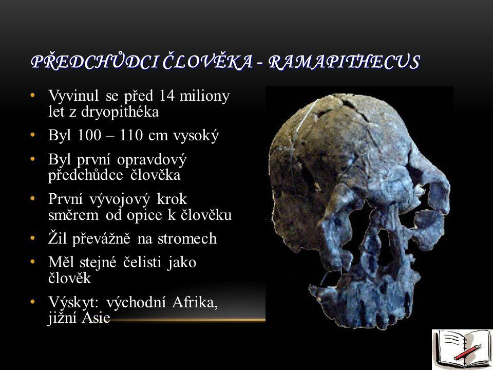 PŘEDCHŮDCI ČLOVĚKA - RAMAPITHECUS Vyvinul se před 14 miliony let z dryopithéka Byl 100 – 110 cm vysoký Byl první opravdový předchůdce člověka První vývojový krok směrem od opice k člověku Žil převážně na stromech Měl stejné čelisti jako člověk Výskyt: východní Afrika, jižní Asie