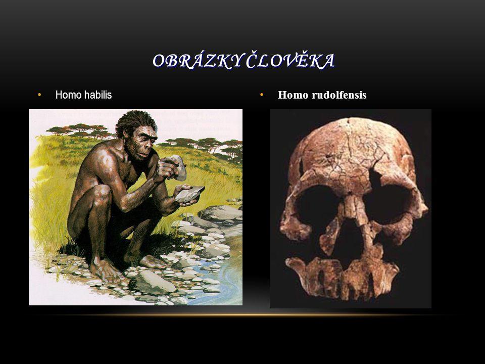 Homo habilis Homo rudolfensis OBRÁZKY ČLOVĚKA