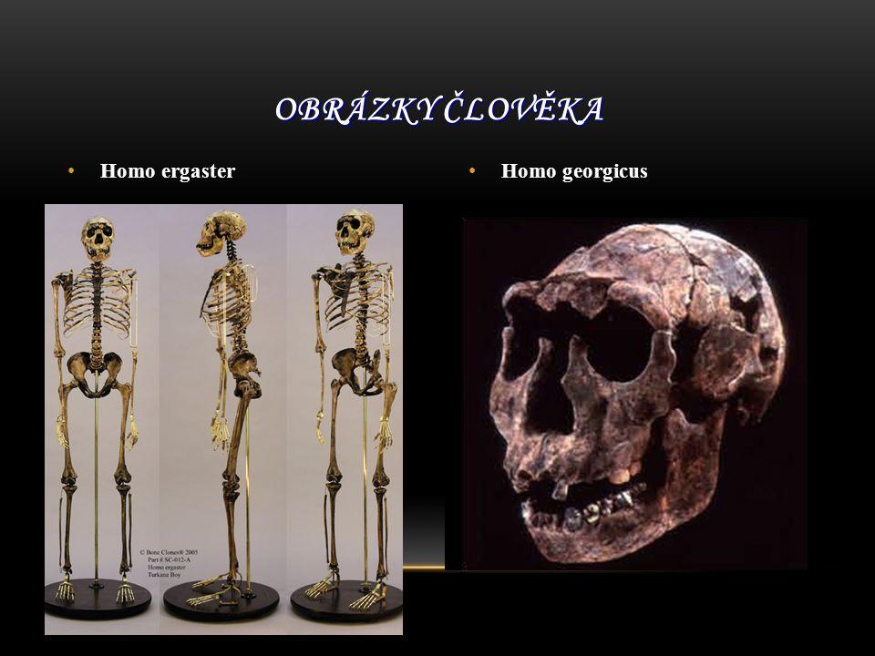 Homo ergaster Homo georgicus OBRÁZKY ČLOVĚKA