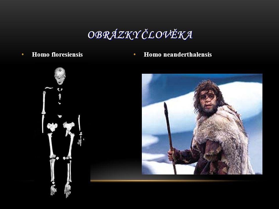 Homo floresiensis Homo neanderthalensis OBRÁZKY ČLOVĚKA