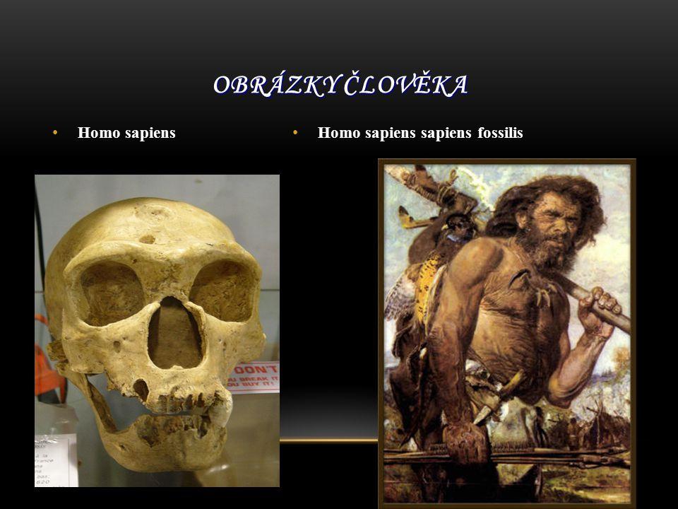 Homo sapiens Homo sapiens sapiens fossilis OBRÁZKY ČLOVĚKA