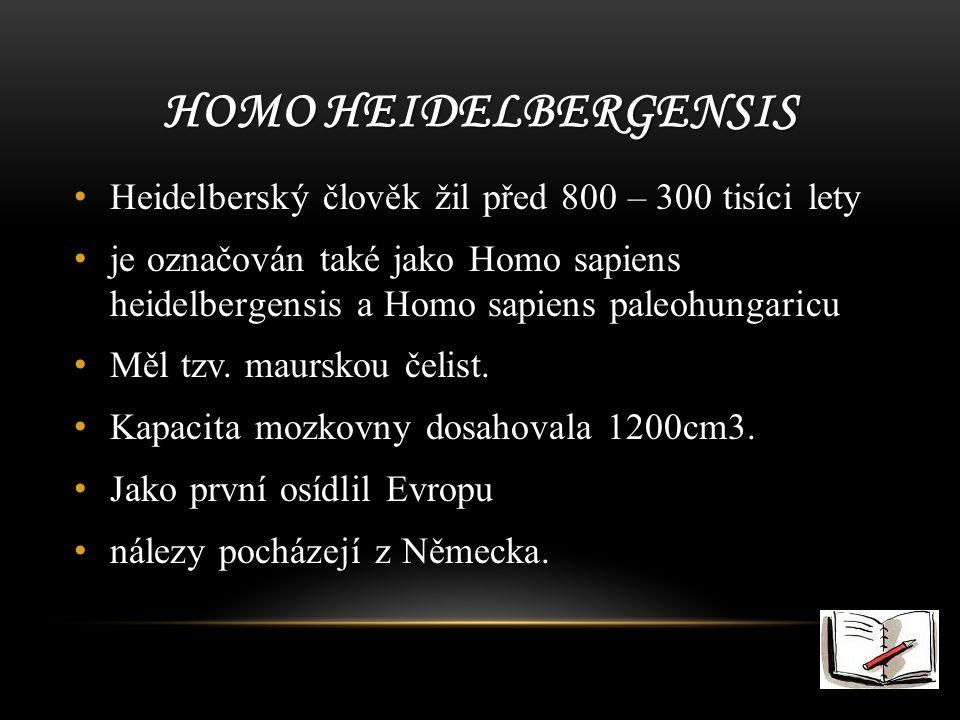 HOMO HEIDELBERGENSIS Heidelberský člověk žil před 800 – 300 tisíci lety je označován také jako Homo sapiens heidelbergensis a Homo sapiens paleohungaricu Měl tzv.