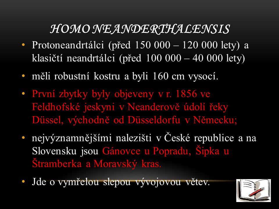 HOMO NEANDERTHALENSIS Protoneandrtálci (před 150 000 – 120 000 lety) a klasičtí neandrtálci (před 100 000 – 40 000 lety) měli robustní kostru a byli 160 cm vysocí.