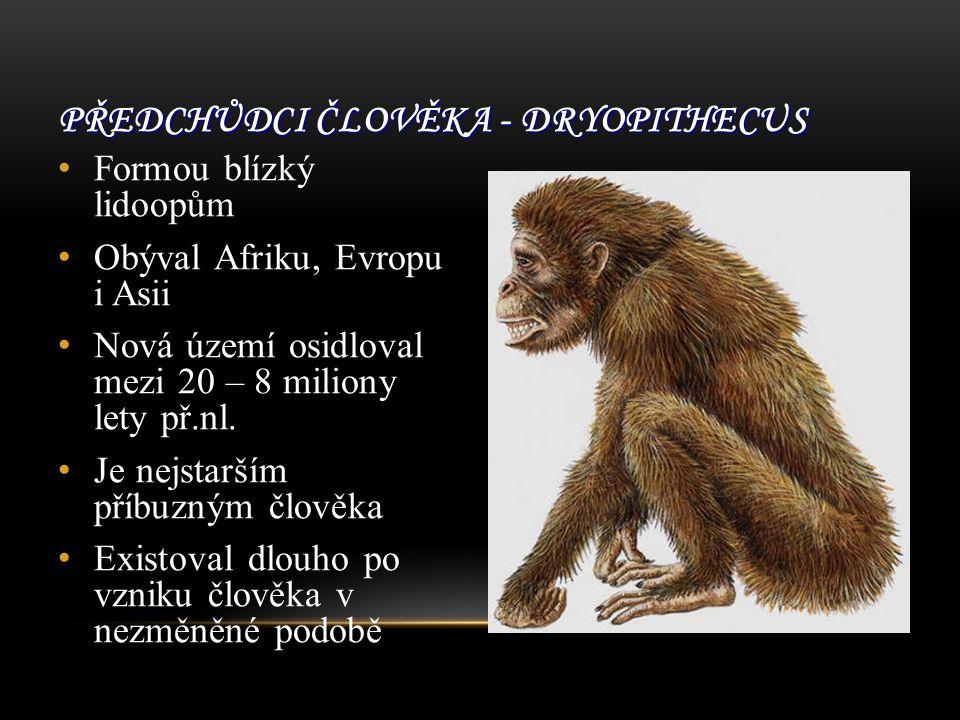 PŘEDCHŮDCI ČLOVĚKA - DRYOPITHECUS Formou blízký lidoopům Obýval Afriku, Evropu i Asii Nová území osidloval mezi 20 – 8 miliony lety př.nl.