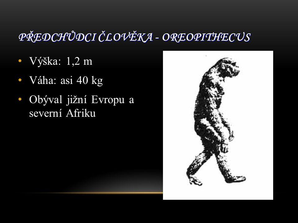 PŘEDCHŮDCI ČLOVĚKA - OREOPITHECUS Výška: 1,2 m Váha: asi 40 kg Obýval jižní Evropu a severní Afriku