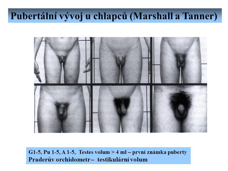 Pubertální vývoj u chlapců (Marshall a Tanner) G1-5, Pu 1-5, A 1-5, Testes volum > 4 ml – první známka puberty Praderův orchidometr – testikulární vol