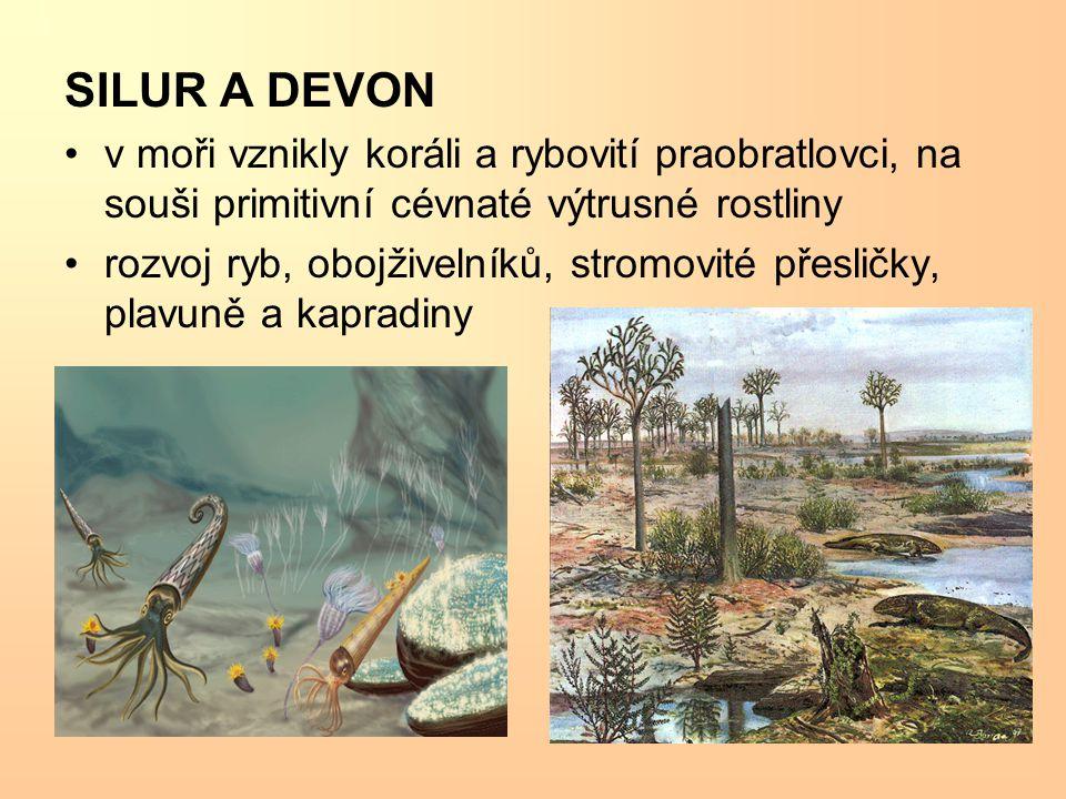 SILUR A DEVON v moři vznikly koráli a rybovití praobratlovci, na souši primitivní cévnaté výtrusné rostliny rozvoj ryb, obojživelníků, stromovité přesličky, plavuně a kapradiny