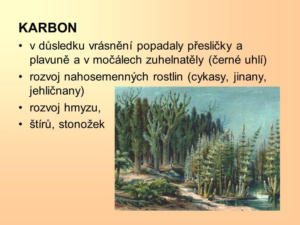 KARBON v důsledku vrásnění popadaly přesličky a plavuně a v močálech zuhelnatěly (černé uhlí) rozvoj nahosemenných rostlin (cykasy, jinany, jehličnany) rozvoj hmyzu, štírů, stonožek