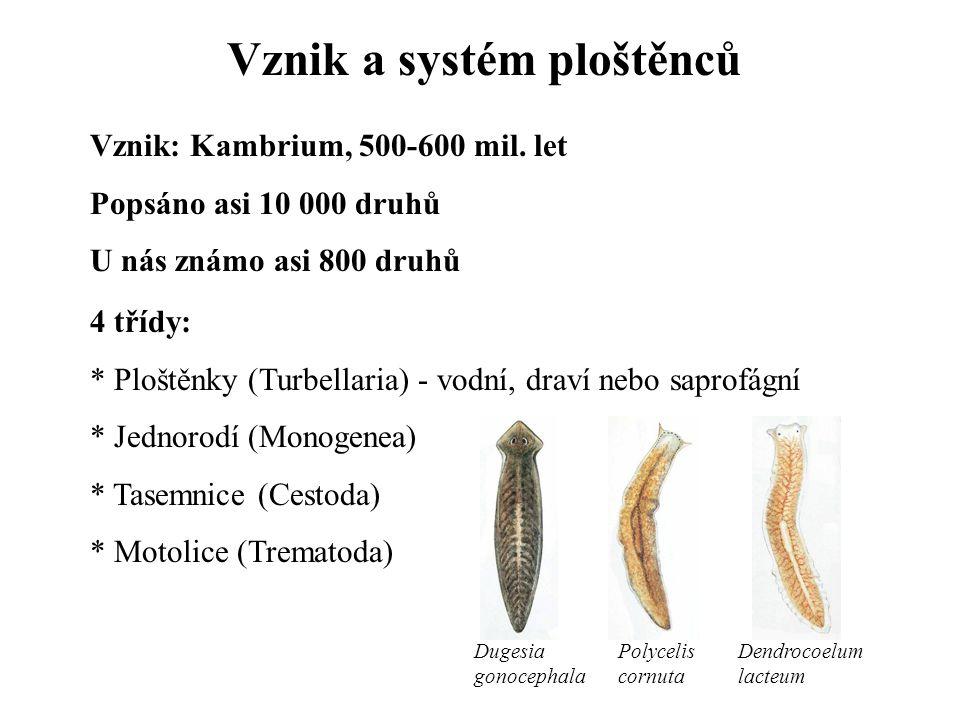 Vznik a systém ploštěnců Vznik: Kambrium, 500-600 mil. let Popsáno asi 10 000 druhů U nás známo asi 800 druhů 4 třídy: * Ploštěnky (Turbellaria) - vod