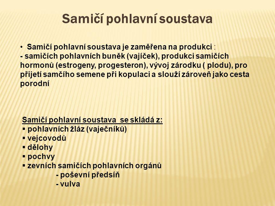 Samičí pohlavní soustava se skládá z:  pohlavních žláz (vaječníků)  vejcovodů  dělohy  pochvy  zevních samičích pohlavních orgánů - poševní předs