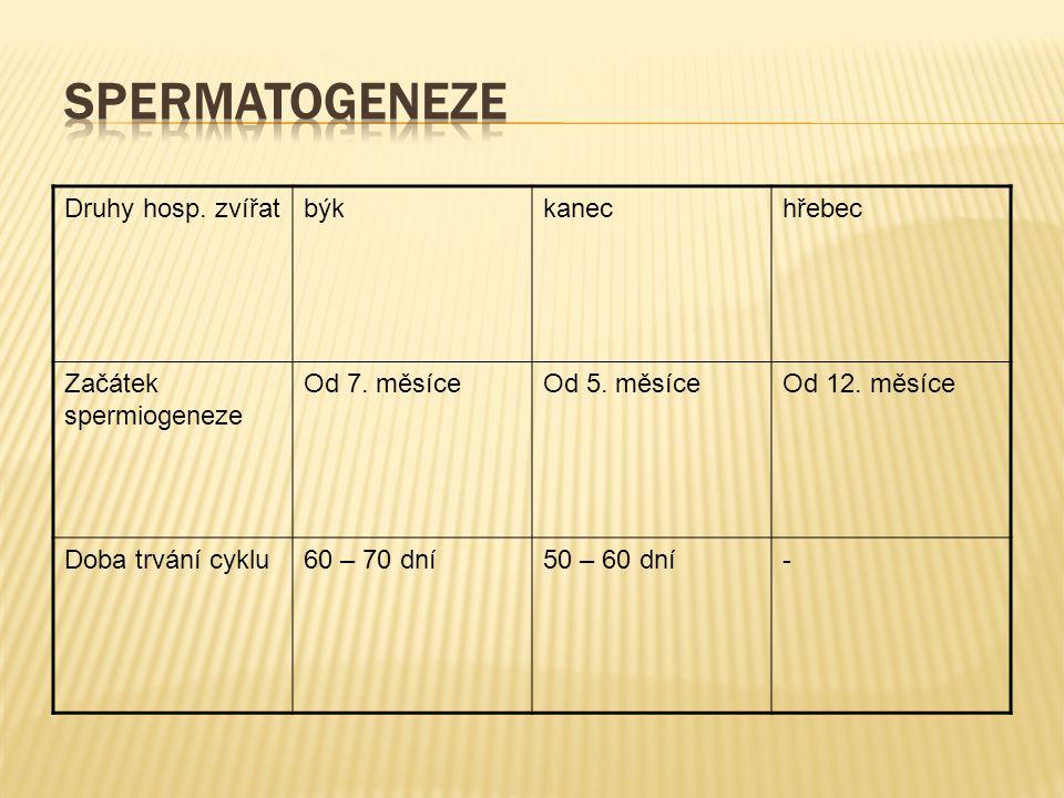 Druhy hosp. zvířatbýkkanechřebec Začátek spermiogeneze Od 7. měsíceOd 5. měsíceOd 12. měsíce Doba trvání cyklu60 – 70 dní50 – 60 dní-