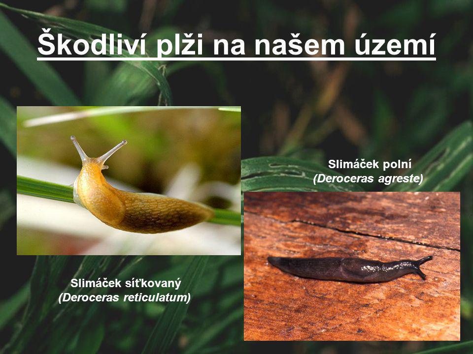 Slimáček síťkovaný (Deroceras reticulatum) Slimáček polní (Deroceras agreste) Škodliví plži na našem území