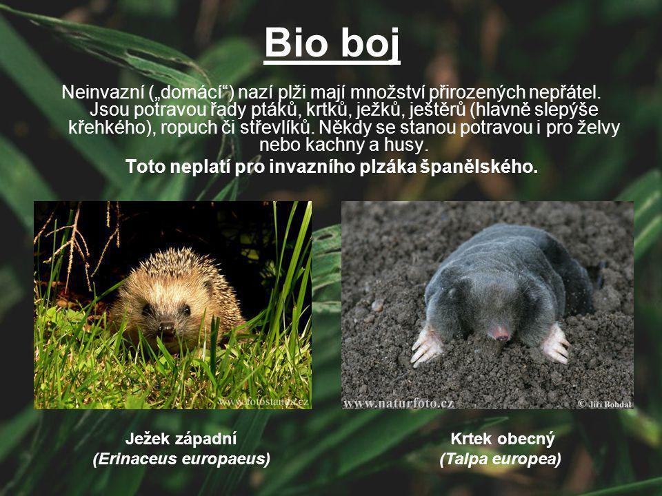 """Bio boj Neinvazní (""""domácí"""") nazí plži mají množství přirozených nepřátel. Jsou potravou řady ptáků, krtků, ježků, ještěrů (hlavně slepýše křehkého),"""