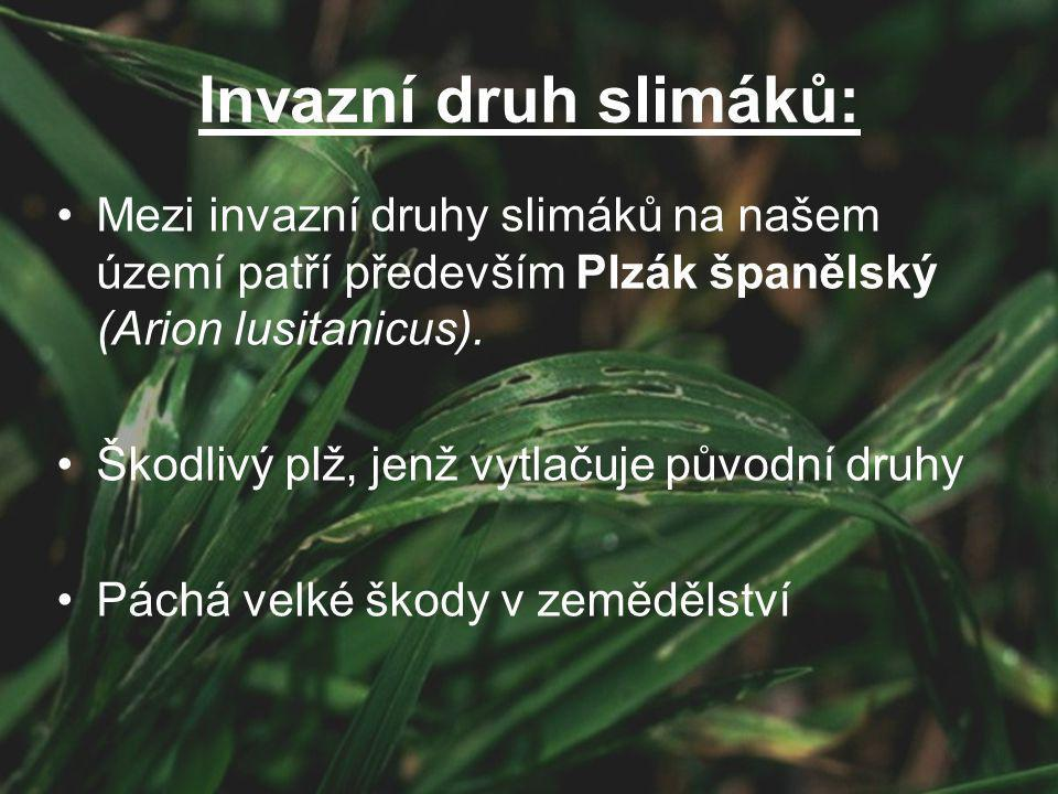 Invazní druh slimáků: Mezi invazní druhy slimáků na našem území patří především Plzák španělský (Arion lusitanicus). Škodlivý plž, jenž vytlačuje půvo