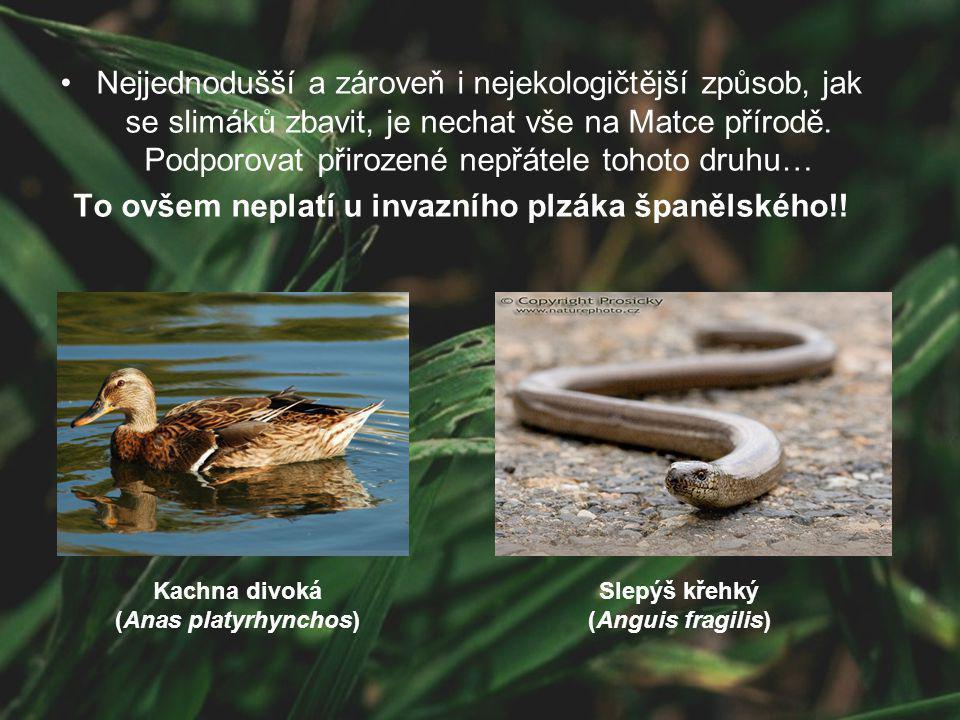 Nejjednodušší a zároveň i nejekologičtější způsob, jak se slimáků zbavit, je nechat vše na Matce přírodě. Podporovat přirozené nepřátele tohoto druhu…