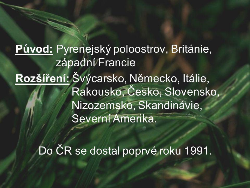 Původ: Pyrenejský poloostrov, Británie, západní Francie Rozšíření: Švýcarsko, Německo, Itálie, Rakousko, Česko, Slovensko, Nizozemsko, Skandinávie, Severní Amerika.