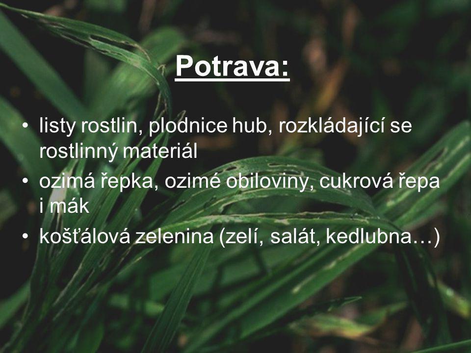 listy rostlin, plodnice hub, rozkládající se rostlinný materiál ozimá řepka, ozimé obiloviny, cukrová řepa i mák košťálová zelenina (zelí, salát, kedlubna…) Potrava: