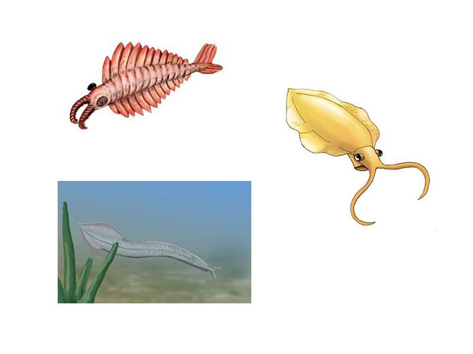 Asi před 300 miliony let – první obratlovci – primitivní obojživelníci – krytolebci (podobní dnešním mlokům) Vajíčka snášeli do vody- pulci (dýchali žábrami) – v dospělosti na suché zemi (dýchali plícemi) Změny – rostliny a po nich živočichové osídlují suchou zemi Stonožky, pavouci, okřídlený hmyz, některé druhy plazů