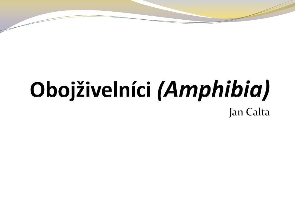 Jan Calta