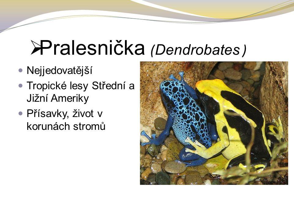  Pralesnička ( Dendrobates ) Nejjedovatější Tropické lesy Střední a Jižní Ameriky Přísavky, život v korunách stromů