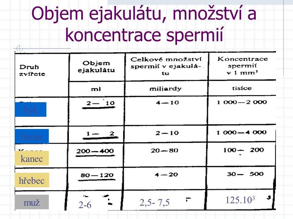 Objem ejakulátu, množství a koncentrace spermií býk beran kanec hřebec muž 2-6 2,5- 7,5 125.10 3