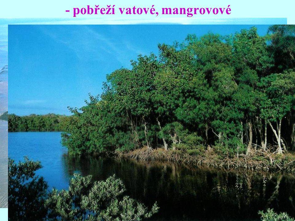 - pobřeží vatové, mangrovové