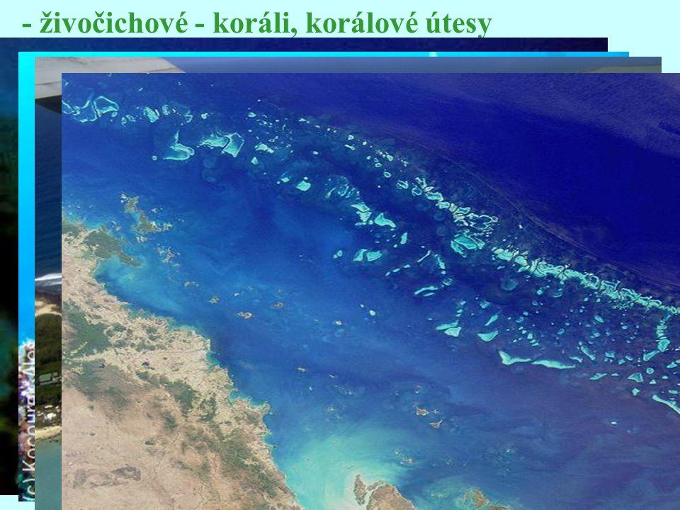 - živočichové - koráli, korálové útesy