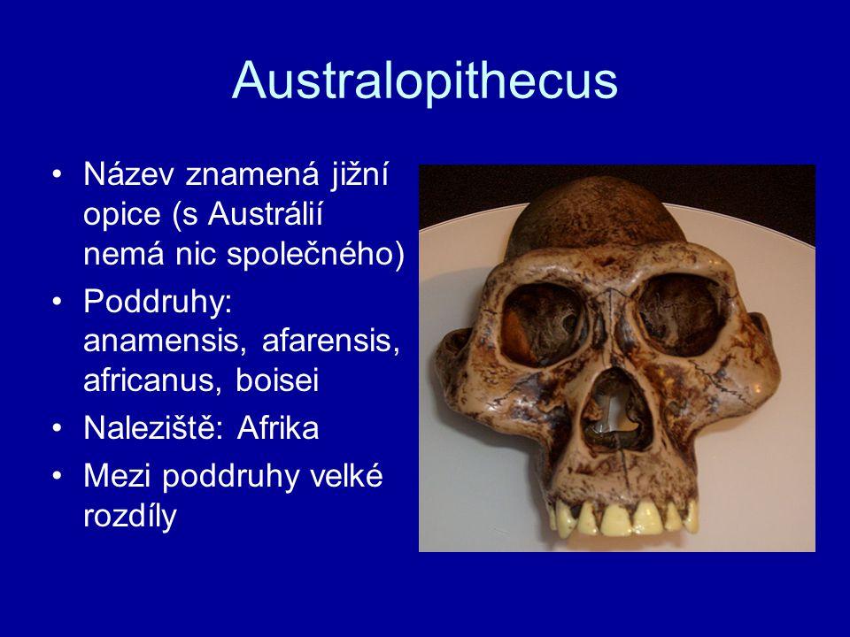 Australopithecus Název znamená jižní opice (s Austrálií nemá nic společného) Poddruhy: anamensis, afarensis, africanus, boisei Naleziště: Afrika Mezi