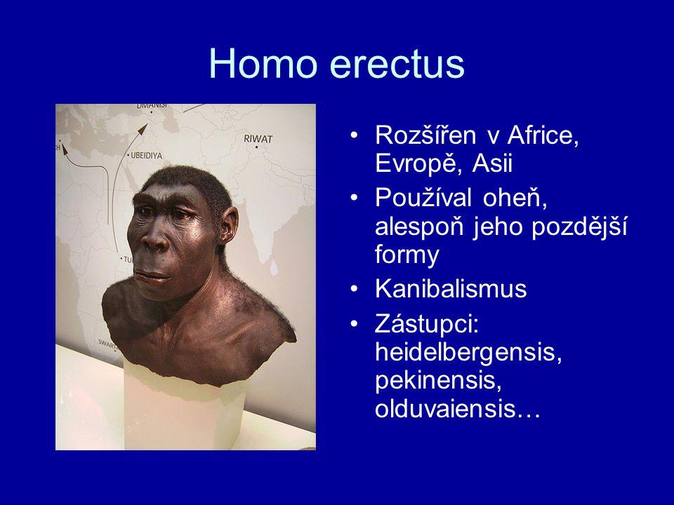 Homo erectus Rozšířen v Africe, Evropě, Asii Používal oheň, alespoň jeho pozdější formy Kanibalismus Zástupci: heidelbergensis, pekinensis, olduvaiens