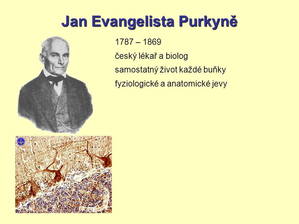 Jan Evangelista Purkyně 1787 – 1869 český lékař a biolog samostatný život každé buňky fyziologické a anatomické jevy