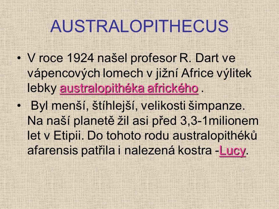 AUSTRALOPITHECUS australopithéka africkéhoV roce 1924 našel profesor R. Dart ve vápencových lomech v jižní Africe výlitek lebky australopithéka africk