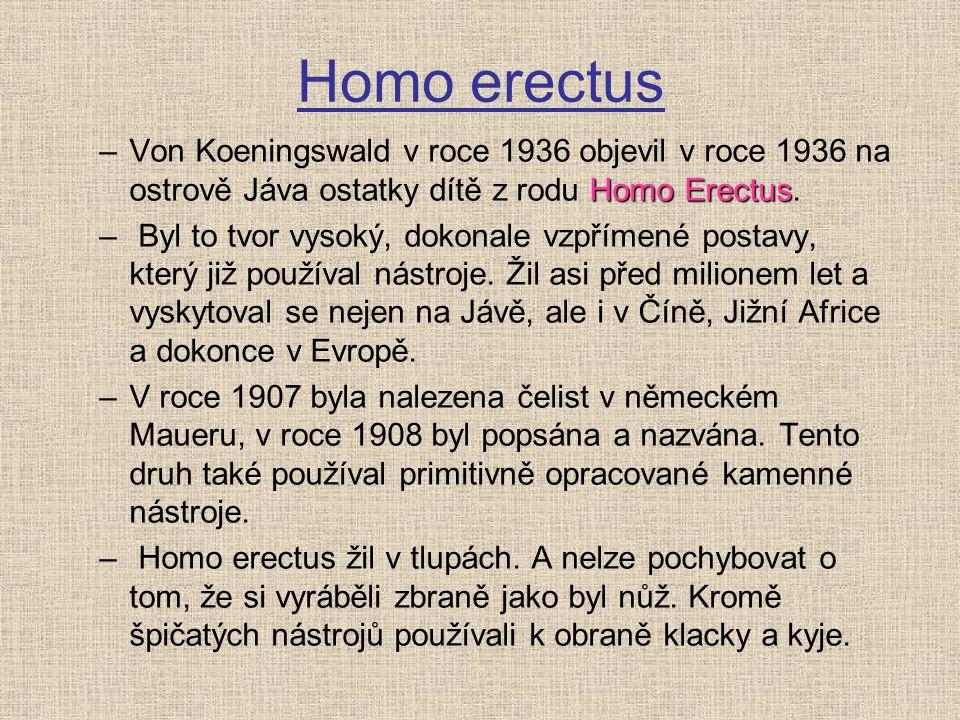 Homo erectus Homo Erectus –Von Koeningswald v roce 1936 objevil v roce 1936 na ostrově Jáva ostatky dítě z rodu Homo Erectus. – Byl to tvor vysoký, do