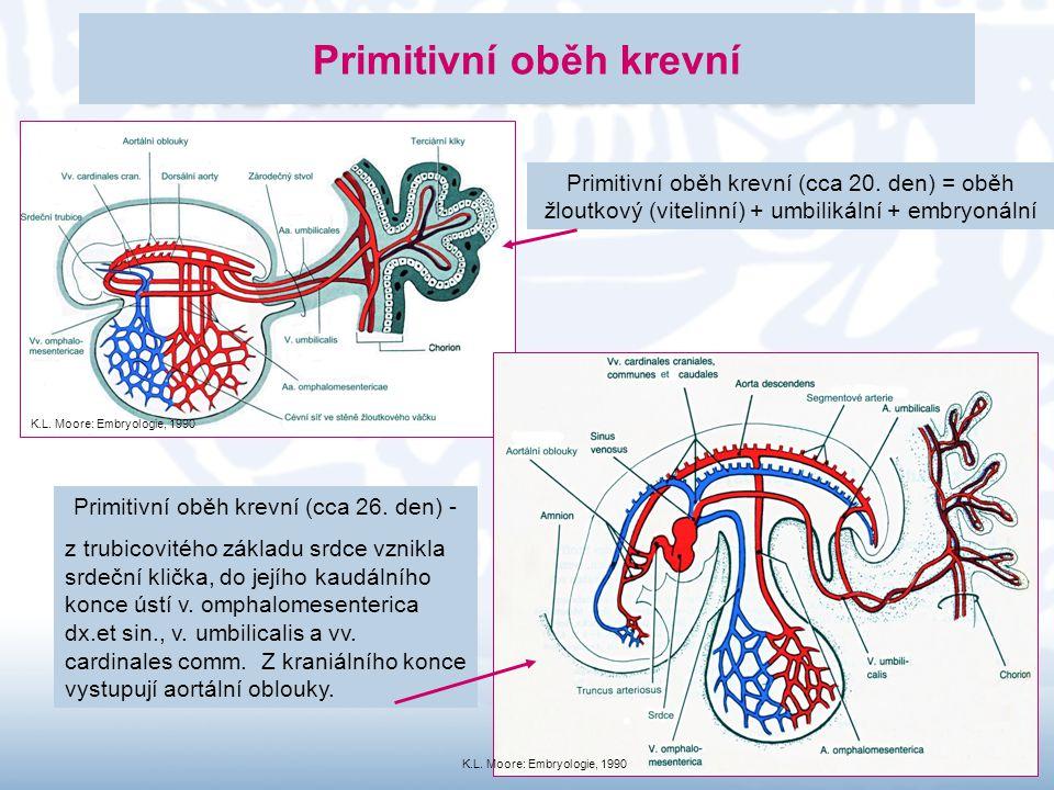 11 Primitivní oběh krevní Primitivní oběh krevní (cca 20. den) = oběh žloutkový (vitelinní) + umbilikální + embryonální Primitivní oběh krevní (cca 26