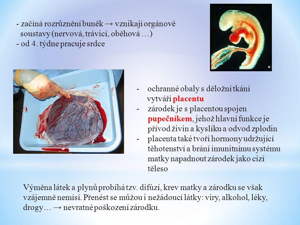 - začíná rozrůznění buněk → vznikají orgánové soustavy (nervová, trávicí, oběhová …) - od 4. týdne pracuje srdce - ochranné obaly s děložní tkání vytv