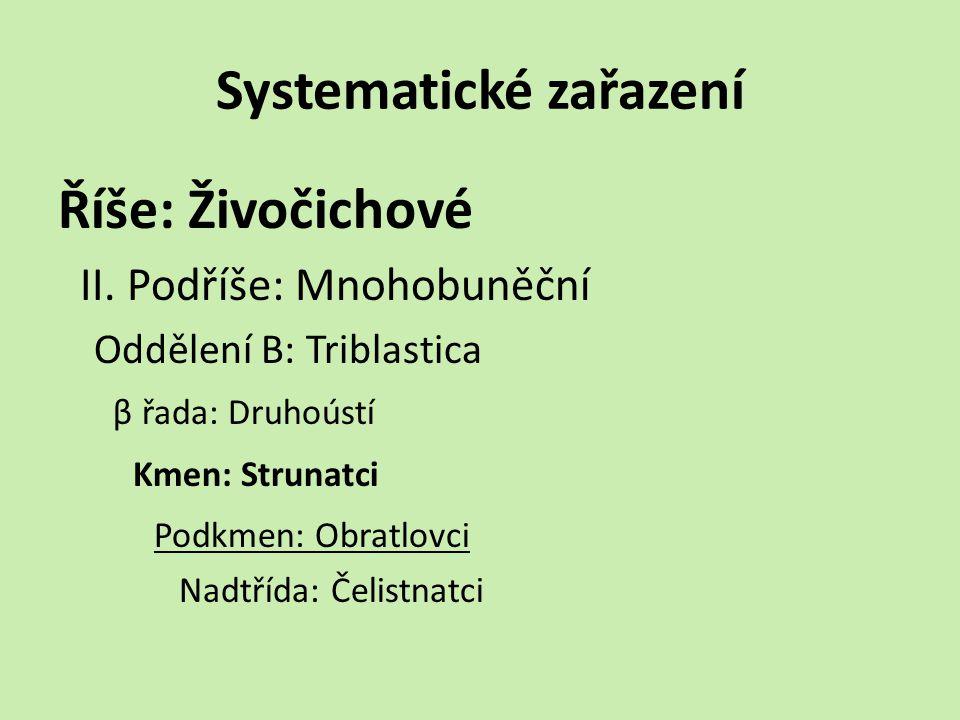 Systematické zařazení Říše: Živočichové II.